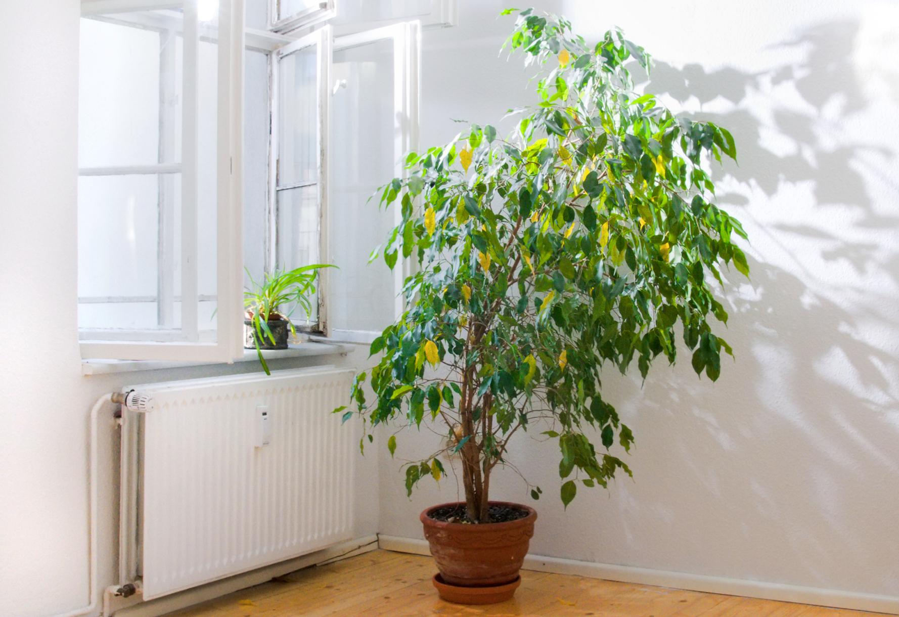 Cura delle piante da interni in estate