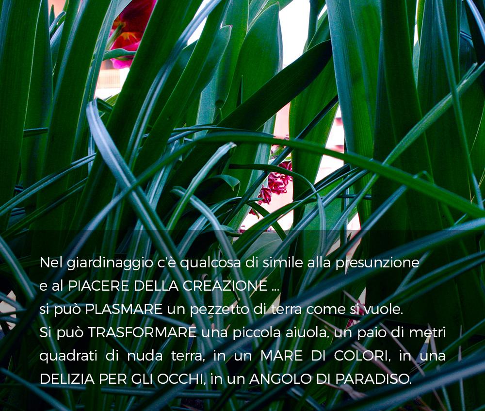 Manutenzione Giardini Milano E Provincia progettazione, realizzazione e manutenzione di giardini e